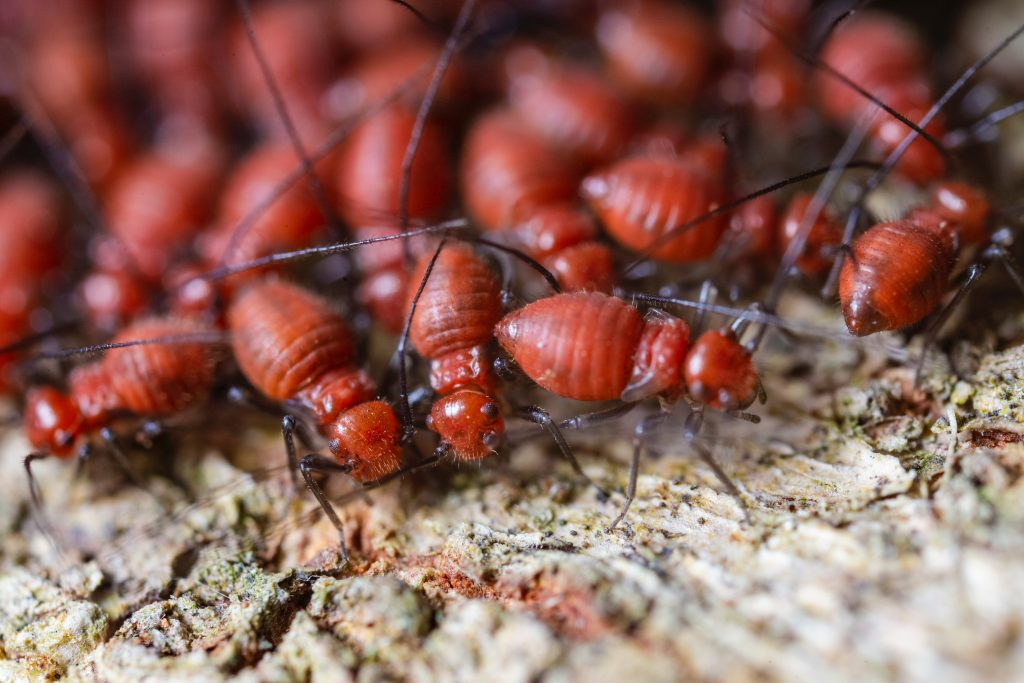 building and pest inspection currumbin